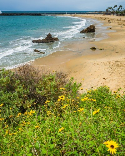 beach with flowers in foreground in Corona del Mar, California