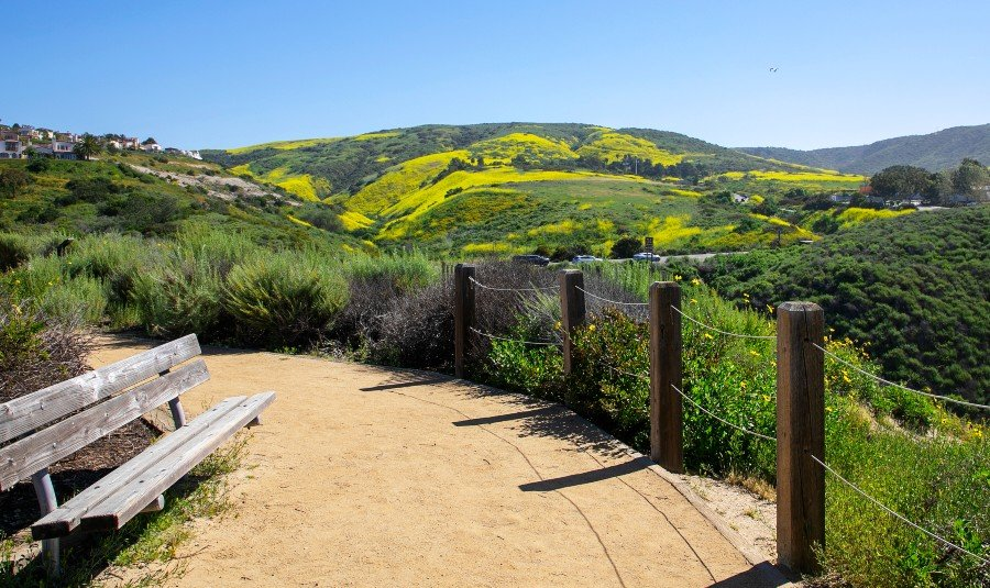 A hiking trail with bench in the hills of Orange County on a sunny day during a super bloom